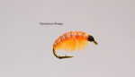 Gammarus3 - Orange